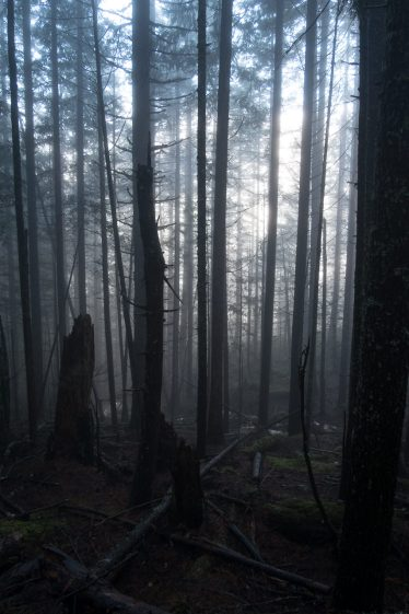 This mists rise through the trees.