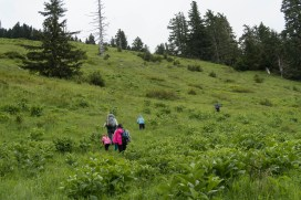 Green Mountain via Sno Bird Trail-4163