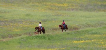 Horses and Wildflowers
