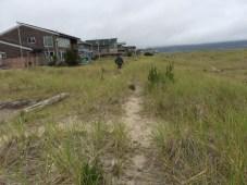 Walk by beach homes