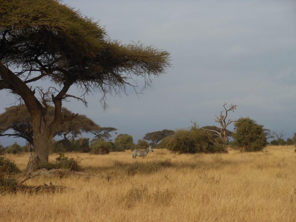 How to do a cheap safari in Kenya