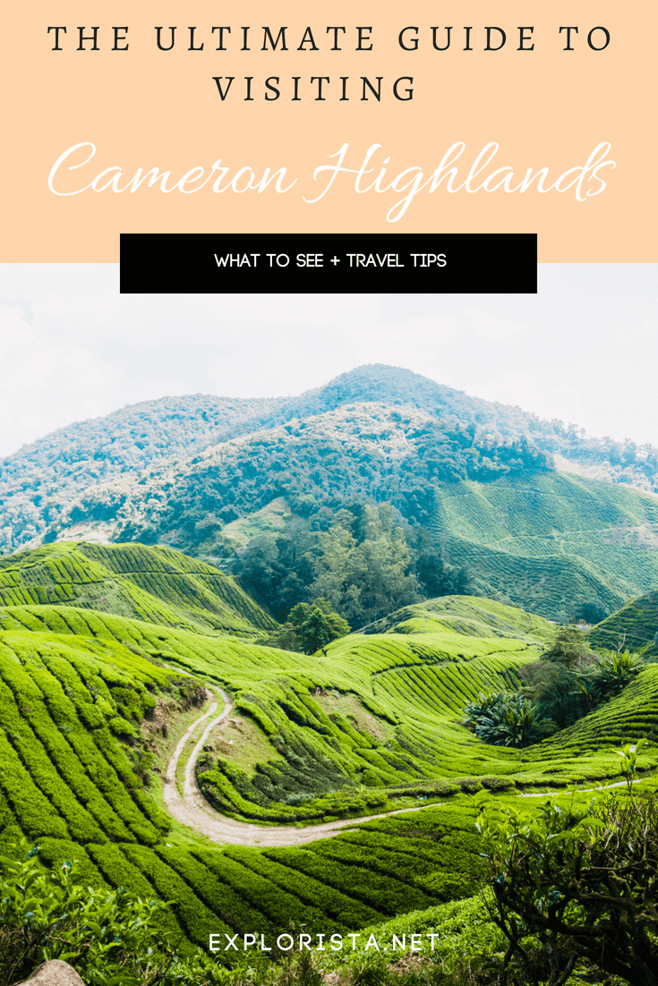 What to do in Cameron Highlands