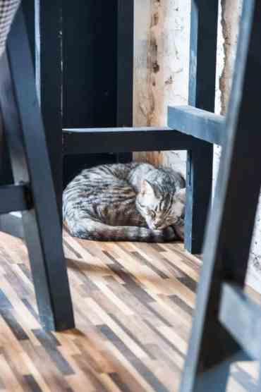 KittyCatCaféBangkok10 - Kitty Cat Café: ik bezocht een echt kattencafé in Bangkok!!! #crazycatlady