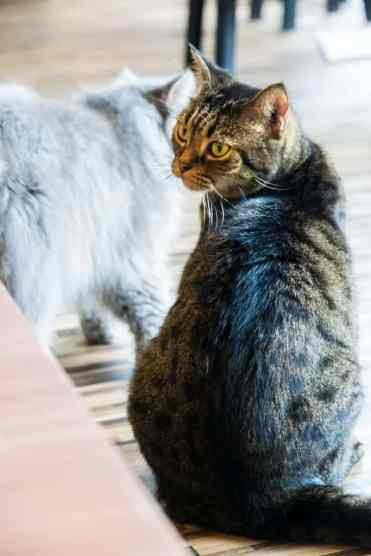 KittyCatCaféBangkok6 - Kitty Cat Café: ik bezocht een echt kattencafé in Bangkok!!! #crazycatlady