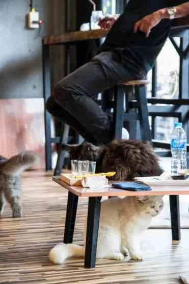 KittyCatCaféBangkok9 - Kitty Cat Café: ik bezocht een echt kattencafé in Bangkok!!! #crazycatlady