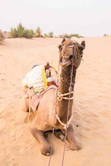 CamelSafariJaisalmer1 - Deze foto's zorgen ervoor dat India bovenaan je bucketlist komt!