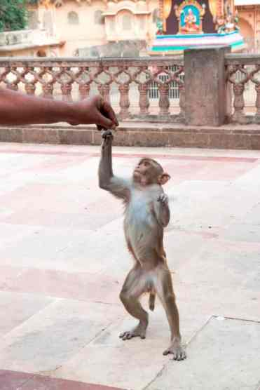 Monkeytemple17