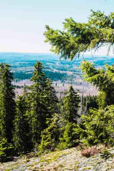 KoliNationalPark8 - Koli National Park in Finland: een Scandinavisch sprookje (dagboekje)