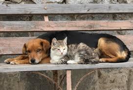 Miedo, ignorancia y desinformación, motiva abandono de mascotas