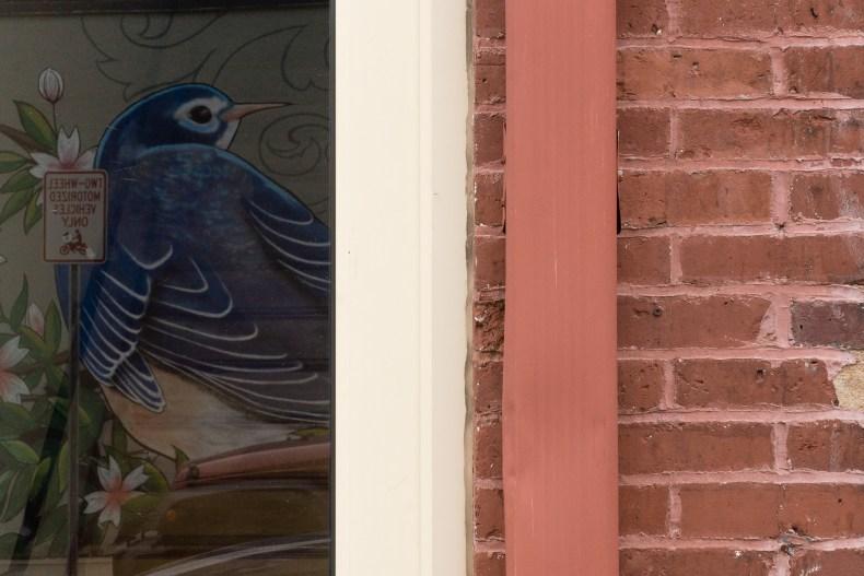 Bluebird Reflected