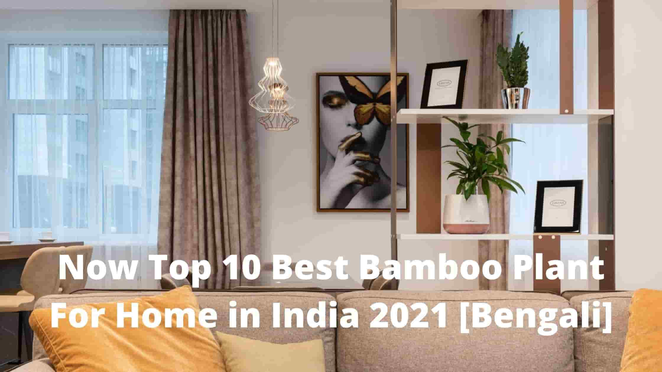 Now Top 10 Best Bamboo Plant For Home in India 2021 [Bengali]