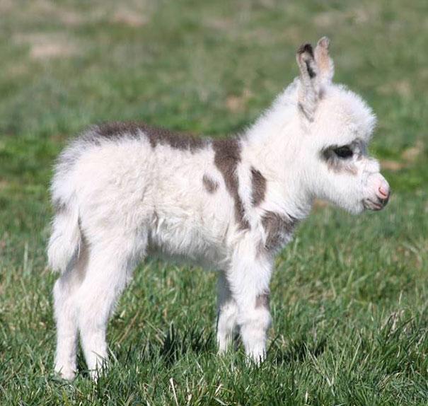 cute animal babies,baby donkey
