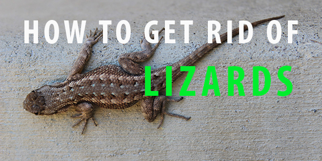 how to get rid of lizards in the house