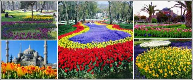 Картинки по запросу 13. İSTANBUL LALE FESTİVALİ