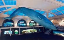 Uma réplica de uma baleia em tamanho real