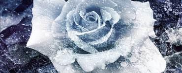 Haiku: a frozen flower | Expressing Life