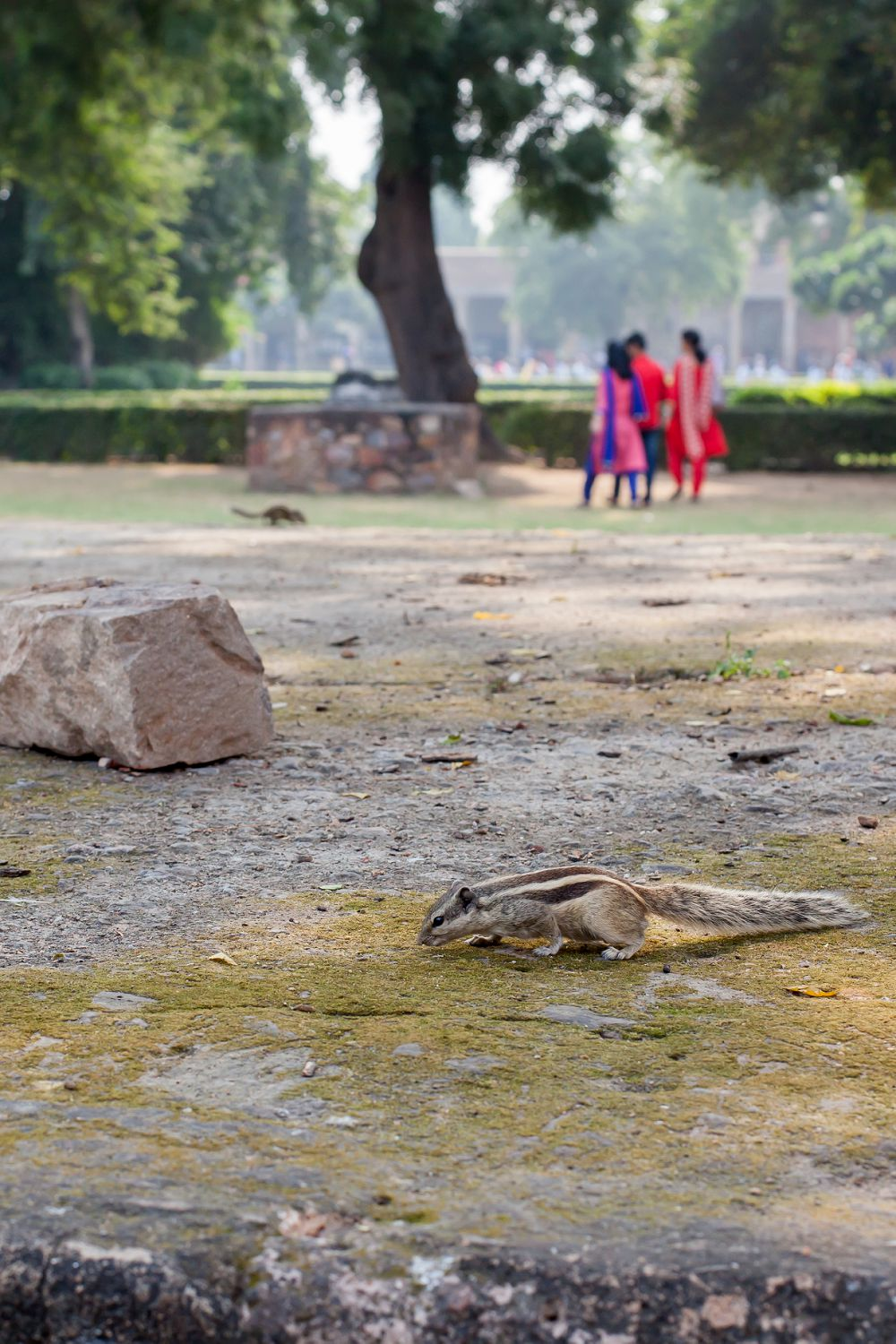 New Delhi Travel Expressions Photography 042