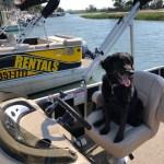 Dog friendly pontoon boat rentals in Murrells Inlet