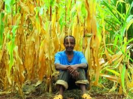 Dilla (Etiopía)