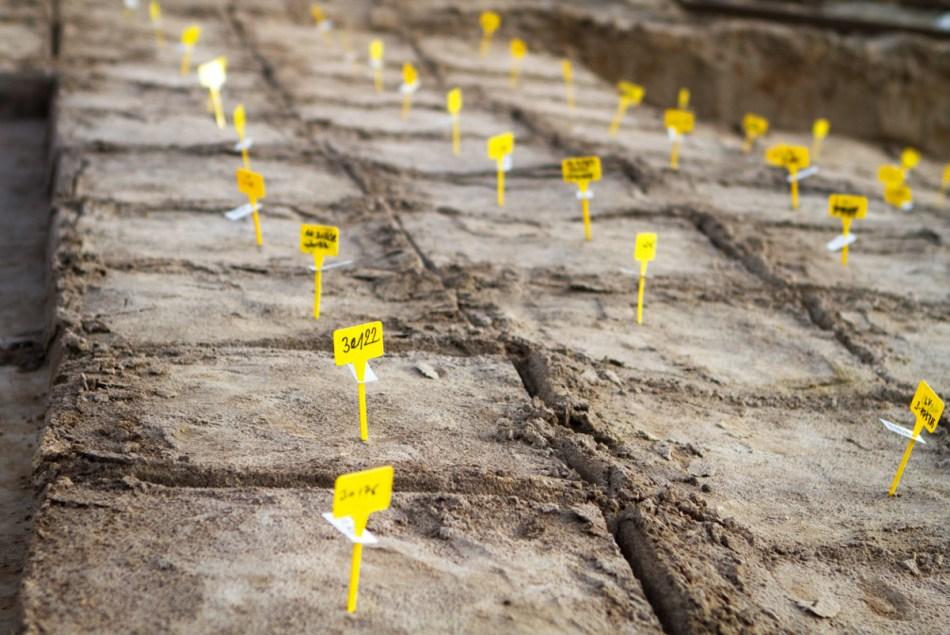 Een zicht op het afgebakende raster. Elk vak krijgt een uniek nummer. Op basis daarvan kan bij de wetenschappelijke studie achteraf de precieze locatie van elke vondst worden achterhaald. Tijdens het onderzoek werden meer dan drieduizend vakken uitgeschept.