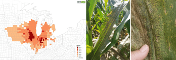 Figure 2. Tar spot spread by year from 2015 until 2019 and tar spot symptoms on corn leaf. Image credits: EddMaps https://maps.eddmaps.org/ and Darcy Telenko.