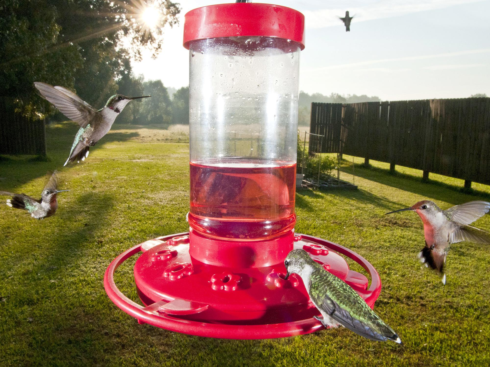 Attract Hummingbirds With Colorful Plants Mississippi State University Extension Service