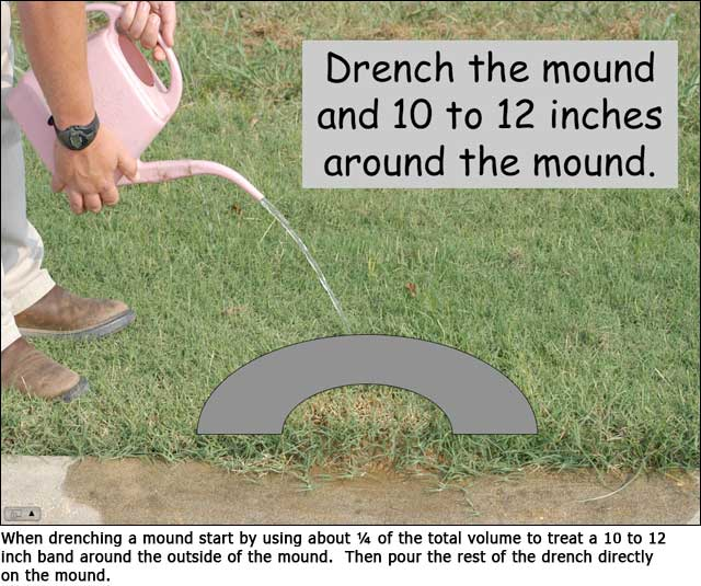 A Mature Mound Will House Over 100 000 Ants