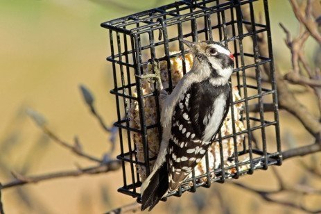 Attracting Birds to a Feeder