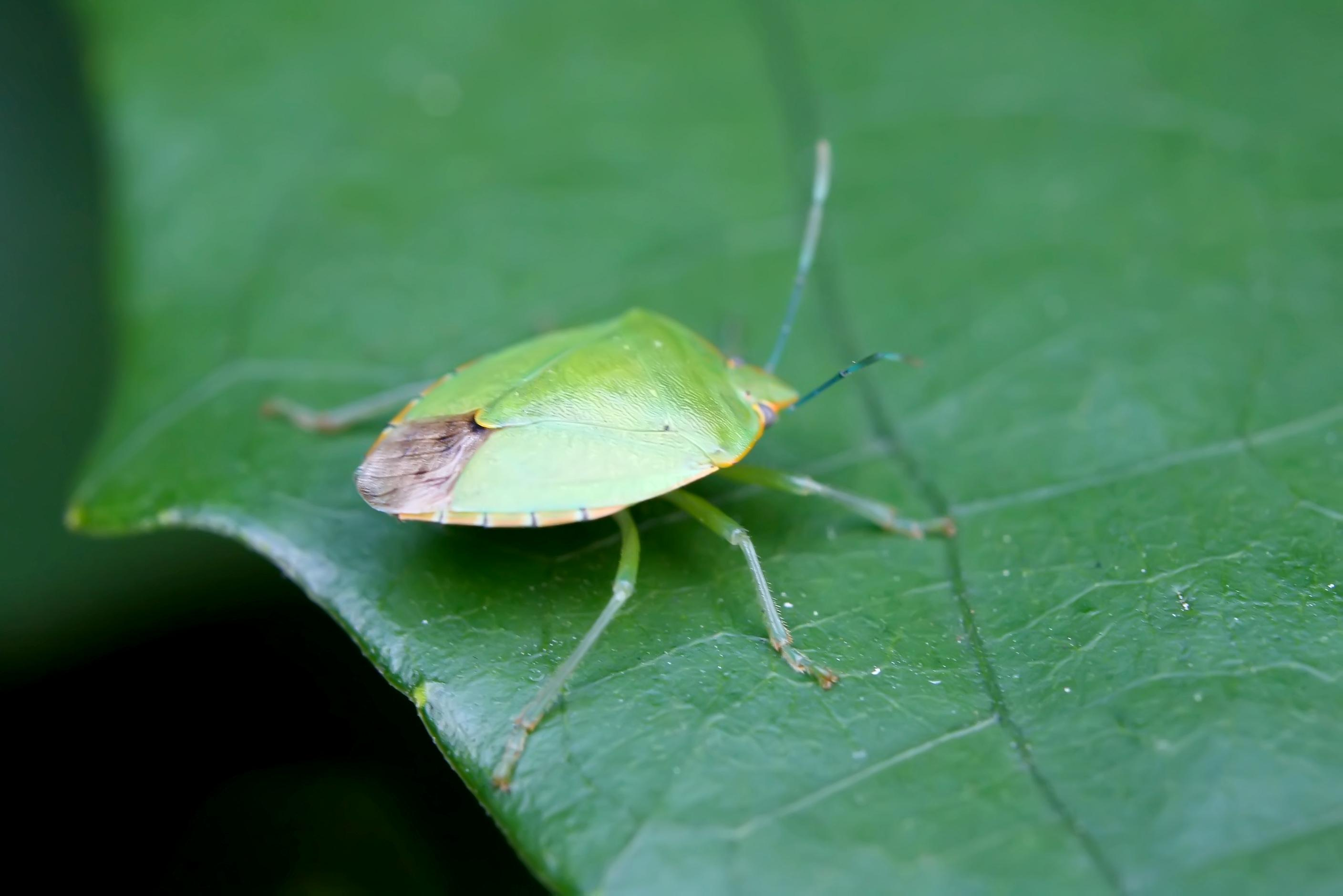 Pest Control Informations And Diy Guides