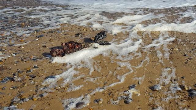 sereia - Imagens de suposto corpo de sereia encontrado praia intriga internautas