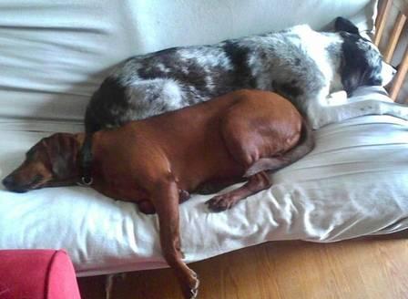 Lucy e Sully dividindo o colchão