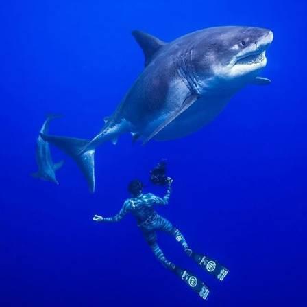 Registro de 'Deep Blue' no litoral do Havaí
