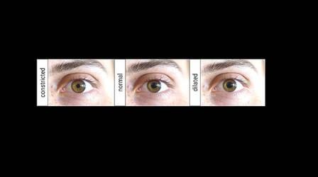 A man can contract and dilate his pupils just by thinking about the specific action