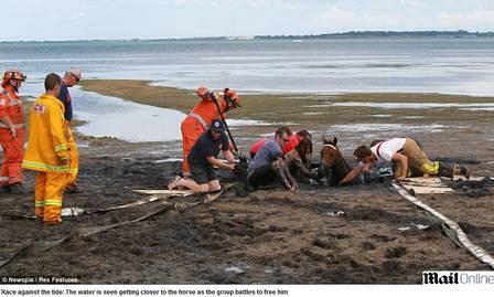 A equipe de resgate trabalha para salvar o animal