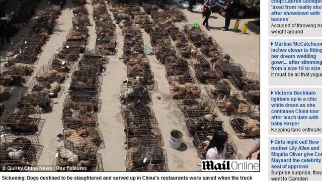 Centenas de cachorros se amontoaram no pátio