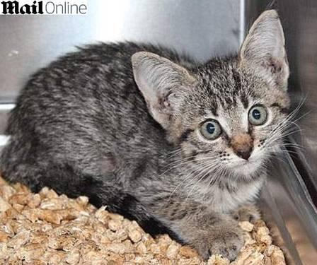 O gatinho ganhou o nome de Fender-Linx, algo como 'lince do para-lama'