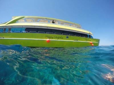Extra Egypt Ausflug Happy Dolphin Ausflug Rotes Meer