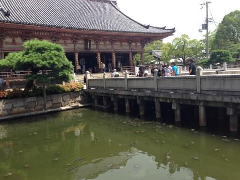 The turtle pond inside the compound of the Shiteno-ji Temple.