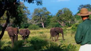 Walking Safari in the Selous