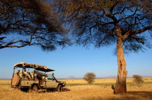 Safari from Kuro in Tarangire National Park