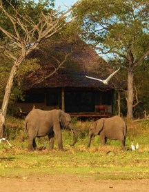Elephants at Siwandu Safari Camp