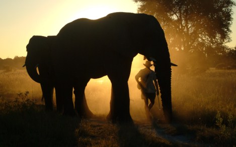 Walking with Elephants from Baines
