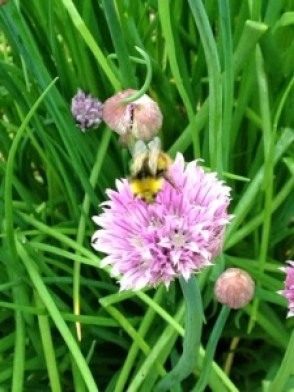 100 Happy Days, Day 69, The Honey Bee