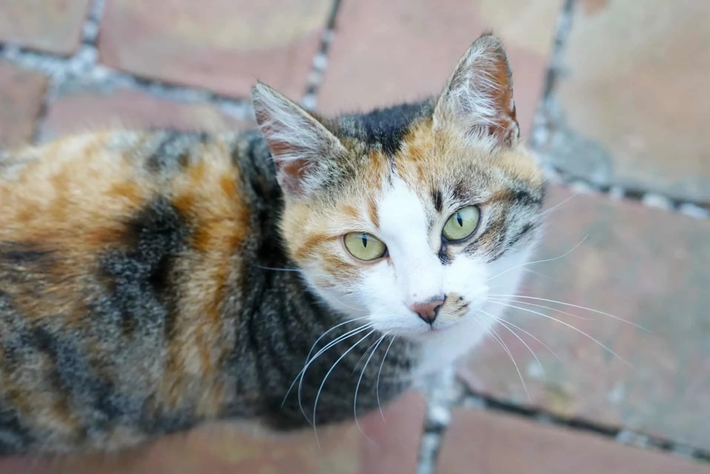 The cats at the Country Relais & Spa Le Capanne is a 100+ year old farmhouse www.extraordinarychaos.com