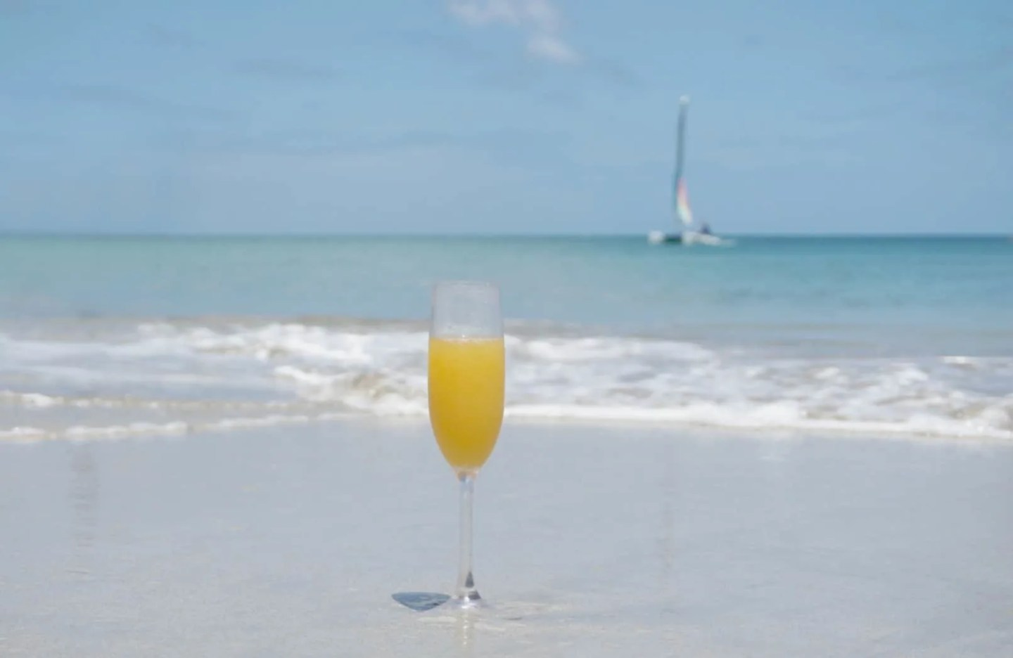 A mimosa in St lucia