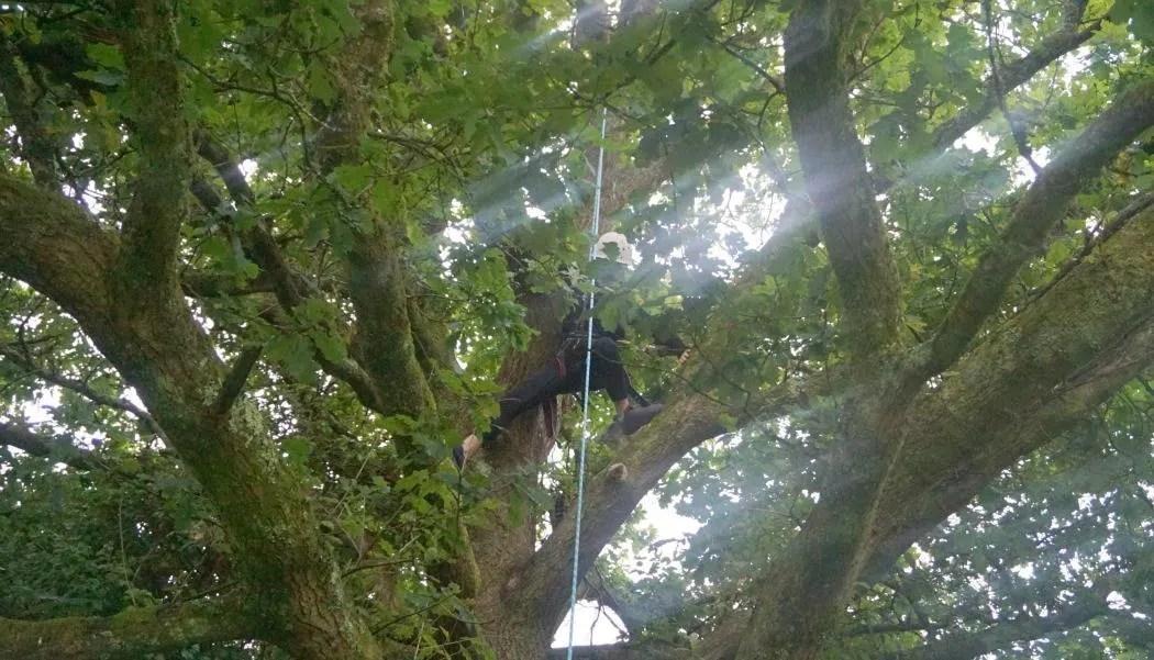 Joe tree climbing in Wales