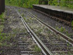Arabidopsis arenosa on railway. From Jouko Lehmuskallio, NatureGate.