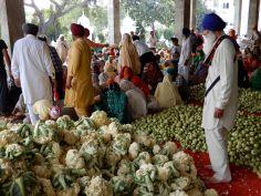 Voluntarios cocina, Templo Dorado Golden Temple, Amritsar, India