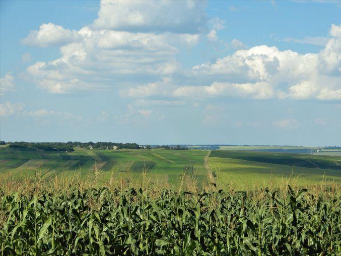 Moldavia, Campos de maíz y girasoles