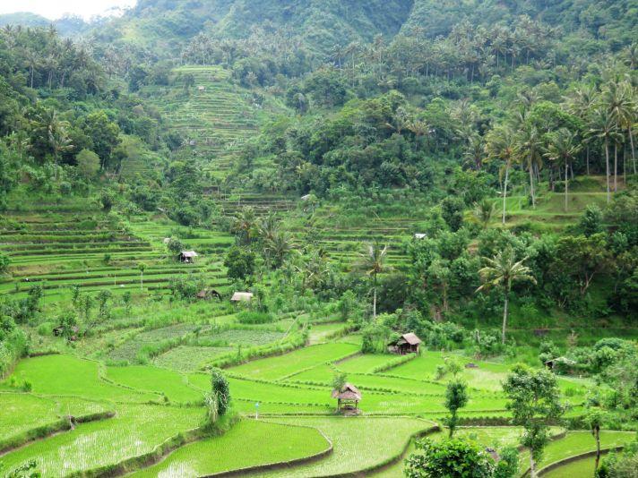 Campos de arroz, Bali, Indonesia